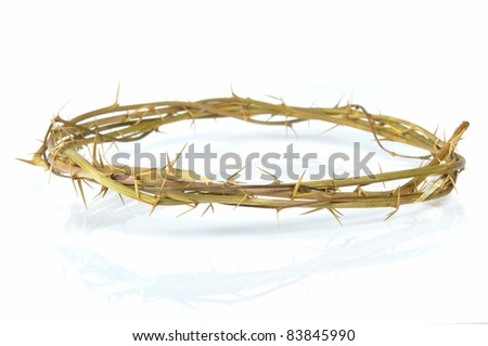 crown of thorns isolated on white background - stock photo