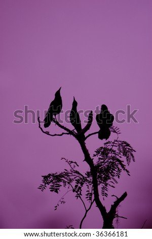 crows in tree with magenta sky white balance altered for spooky effect - stock photo