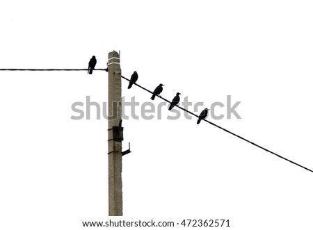 crows on a wire silhouette of nature