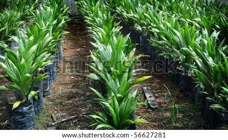 Crude Palm Oil Plant in Malaysia. - stock photo