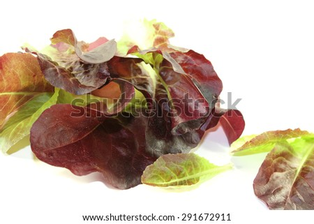 crunchy red lettuce on a bright background - stock photo