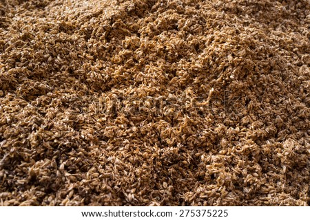 Crushed malt grains fermenting - stock photo