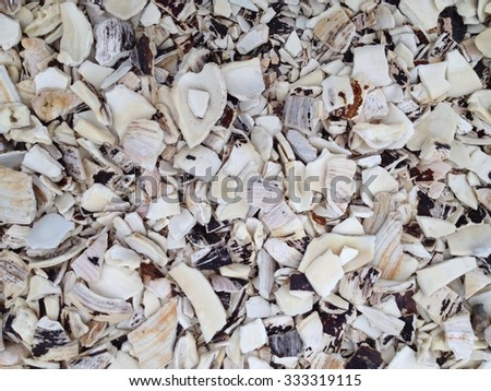 Crushed Shells Stock Images Royalty Free Images Vectors