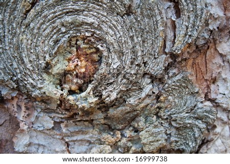 crust tree texture can be used as background