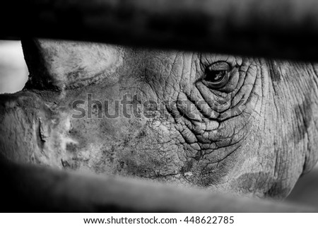 Cry Rhino, Sad eye Rhino