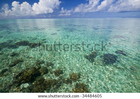 Crystal clear tropical island coral