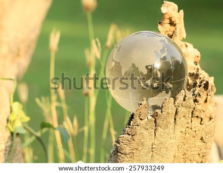 Crystal World Asia zone with evening sunshine on stump green background. - stock photo
