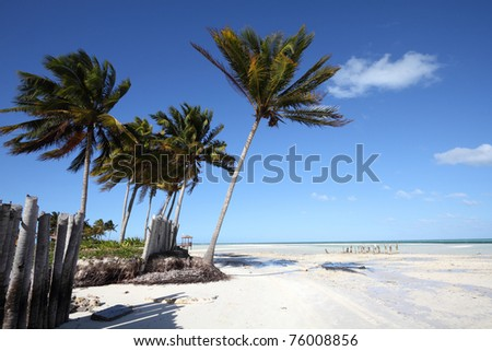 Cuba - Caribbean beach Cayo Guillermo. Sandy coast nad coconut palm trees. Jardines del Rey region. - stock photo