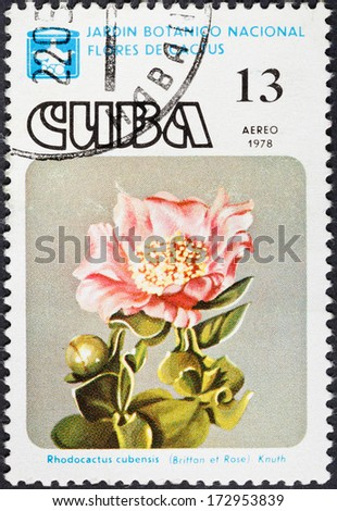 CUBA - CIRCA 1978: A postage stamp printed in the Cuba shows blossoming of Rhodocactus cubenis cactus in National botanical garden, circa 1978 - stock photo