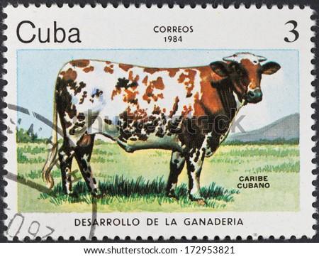 CUBA - CIRCA 1984: A postage stamp printed in the Cuba shows development of livestock on Cuba - Cuban caribbean breed cows, circa 1984 - stock photo