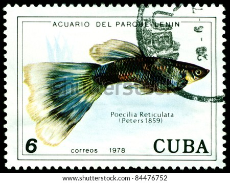 CUBA - CIRCA 1978: a stamp printed by Cuba  show the fishes with the inscription Poecilia Reticulata, Lenin Park Aquarium, Havana.  Series, circa 1978