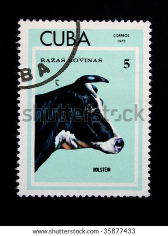 CUBA - CIRCA 1973: A stamp printed by Cuba shows a Cow, stamp is from a series circa 1973.