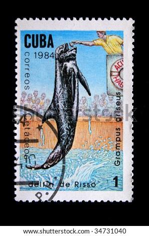 """CUBA - CIRCA 1984: A stamp printed by Cuba shows a """"delfin de Riso"""". - stock photo"""