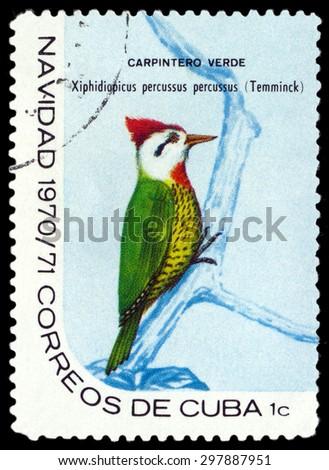CUBA - CIRCA 1970: A stamp printed by Cuba, shows  bird Cuban green woodpecker, Xiphidiopicus percussus, circa 1970 - stock photo