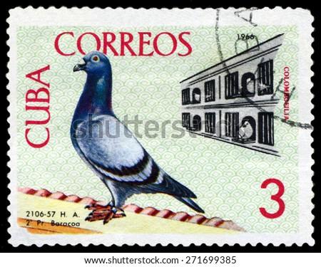 CUBA - CIRCA 1966: A stamp printed by Cuba, shows  Birds. Coops, Baracoa to Havana championship flight, 1959, circa 1966 - stock photo