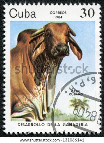 CUBA - CIRCA 1984: A stamp printed by CUBA shows cow, series animals, circa 1984 - stock photo