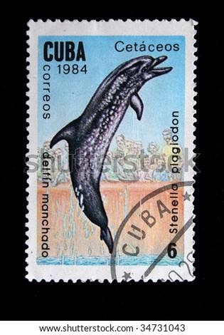"""CUBA - CIRCA 1984: A stamp printed by Cuba shows """"delfin Manchado"""". - stock photo"""
