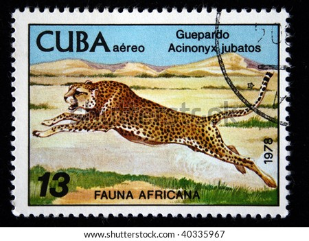 CUBA - CIRCA 1978: A stamp printed by Cuba shows the Cheetah - Acinonyx jubatus, stamp is from the series, circa 1978