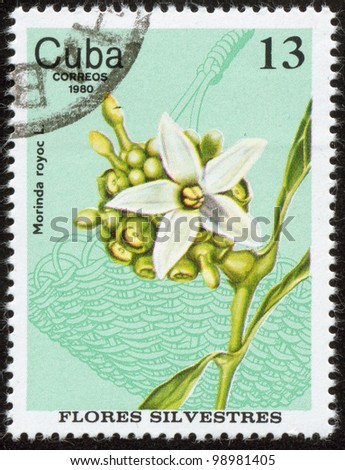 CUBA - CIRCA 1980: A stamp printed by Cuban Post is from series Wild Flowers. It shows Morinda royoc L. (a madder family plant), circa 1980
