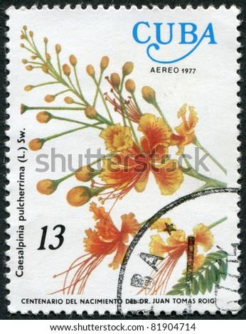 CUBA - CIRCA 1977: A stamp printed in Cuba, flower shows Caesalpinia pulcherrima, circa 1977 - stock photo