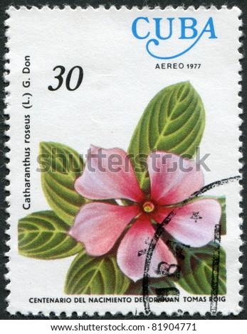 CUBA - CIRCA 1977: A stamp printed in Cuba, flower shows Catharanthus roseus (Madagascar Periwinkle), circa 1977 - stock photo