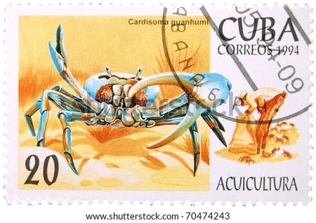 Blue Land Crab For Sale Blue Land Crab Circa