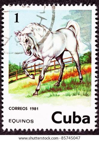CUBA - CIRCA 1981: A stamp printed in Cuba shows a majestic white horse standing in a pasture, circa 1981. - stock photo