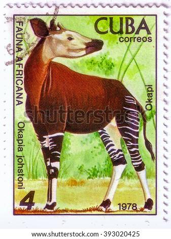 CUBA - CIRCA 1978: A stamp printed in CUBA shows a Okapia johnstoni, African fauna series, circa 1978 - stock photo