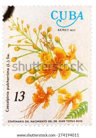 CUBA - CIRCA 1977: A stamp printed in Cuba shows image of a Caesalpinia pulcherrima, circa 1977 - stock photo