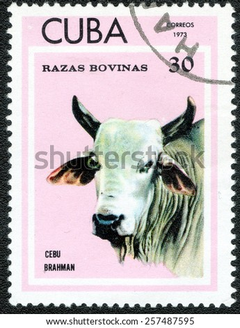"CUBA - CIRCA 1973: A Stamp printed in CUBA shows series ""Thoroughbred Cows"" image CEBU BRAHMAN circa 1973 - stock photo"