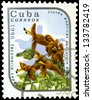 "CUBA - CIRCA 1986: A stamp printed in Cuba shows Tecomaria capensis Flower, with the same inscription, from the series ""Exotic Flowers from botanical garden"", circa 1986 - stock photo"
