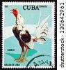 CUBA - CIRCA 1981: a stamp printed in the Cuba shows Canelo, Fighting Cock, circa 1981 - stock photo