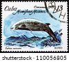 CUBA - CIRCA 1980: a stamp printed in the Cuba shows Cuvier's Beaked Whale, Ziphius Cavirostris, Marine Mammal, circa 1980 - stock photo
