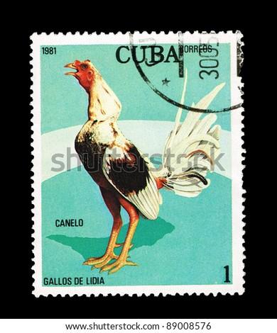 CUBA - CIRCA 1981: A stamp printed in the CUBA, shows gallos de lidia Canelo,  circa 1981 - stock photo