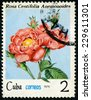 """CUBA - CIRCA 1979: A Stamp shows image of a pink Rose with the inscription """"rosa centifolia anemonoides"""", series, circa 1979 - stock photo"""