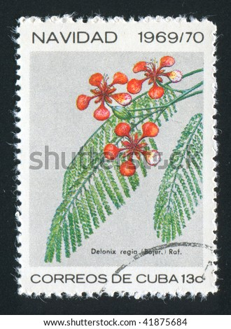 CUBA - CIRCA 1967: Latin Beautiful tropical flower, circa 1967.