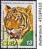 CUBA-CIRCA 1977s: A stamp printed in the Cuba shows  tiger -  panthera tigris, circa 1977s - stock photo