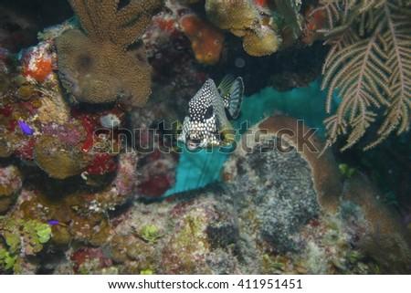 Cuba coral life underwater  - stock photo