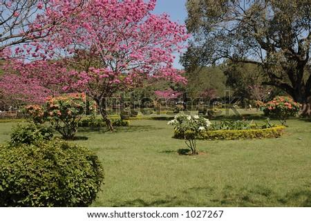 cubbon park, bangalore - stock photo