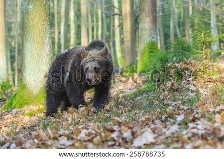 cube bear in the wood - stock photo