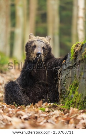 cube bear is leaning against a rock - stock photo