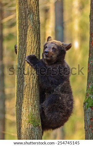 cube bear on the tree - stock photo