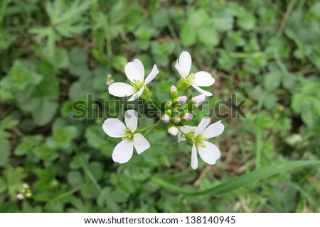Cuckoo Flower Stock Images Royalty Free Images Amp Vectors
