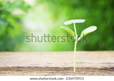 Cucumber growing on wooden table  - stock photo