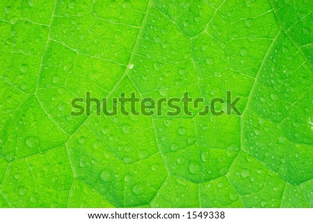 Cucumber leaf structure