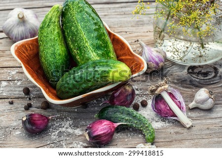 Cucumber pickled with dill and garlic on wooden table. - stock photo