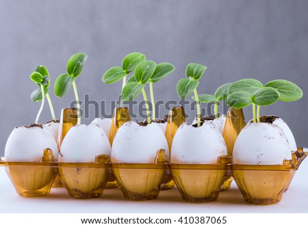 Cucumber sprouts in an eggshell. - stock photo