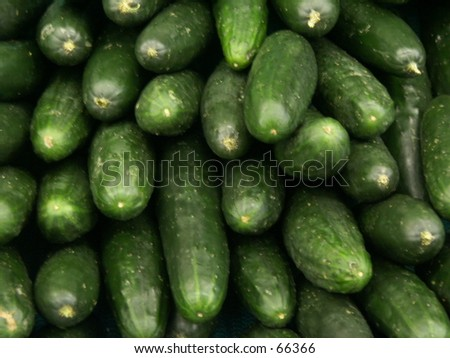 Cucumbers - stock photo
