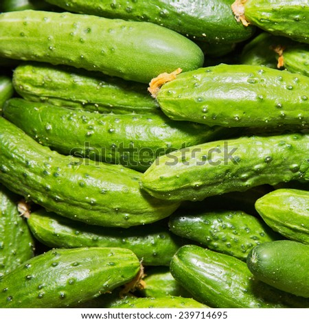 Cucumbers, background on the counter in the store