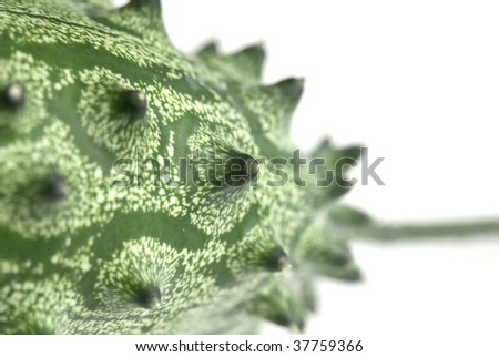 Cucumis metuliferus - Exotic fruit. kiwano. horned melon, African horned cucumber Anguriya. - stock photo